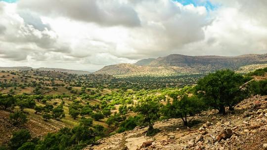 Argan_field_morocco_frenethika_-_copie-1451862968