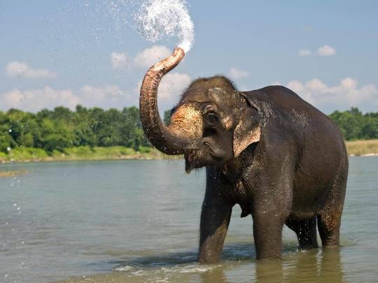 Elephant-1452024082