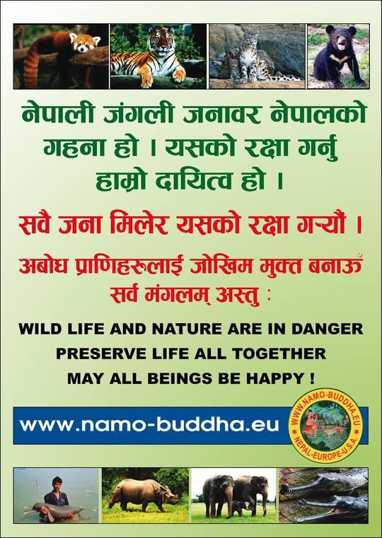 Namo_buddha_asso_poster-1452027208