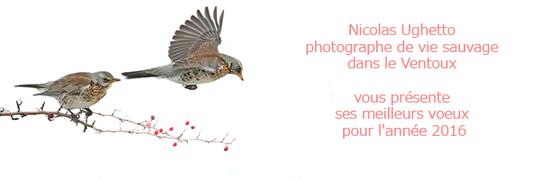 Voeux_nico-1452165035