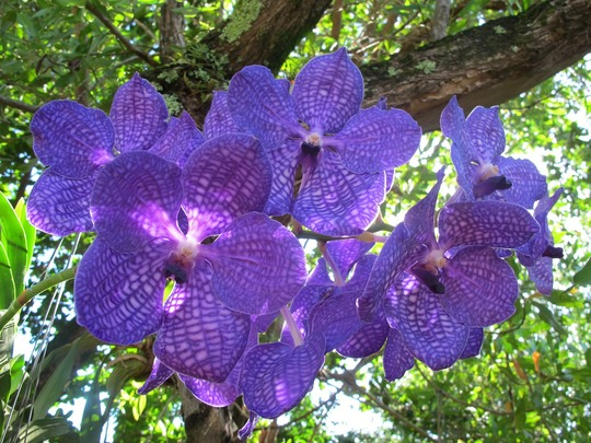 Orchid-607351_1280-1452238804