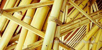 Lia-beach-bamboo-1452733073