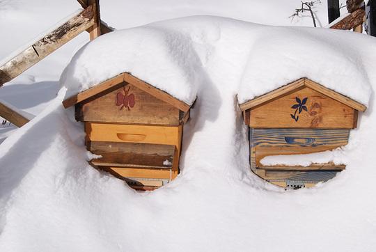 Ruches-sous-la-neige-1453059985