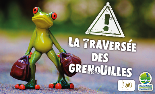 La-travers_e-des-grenouilles-1454061800