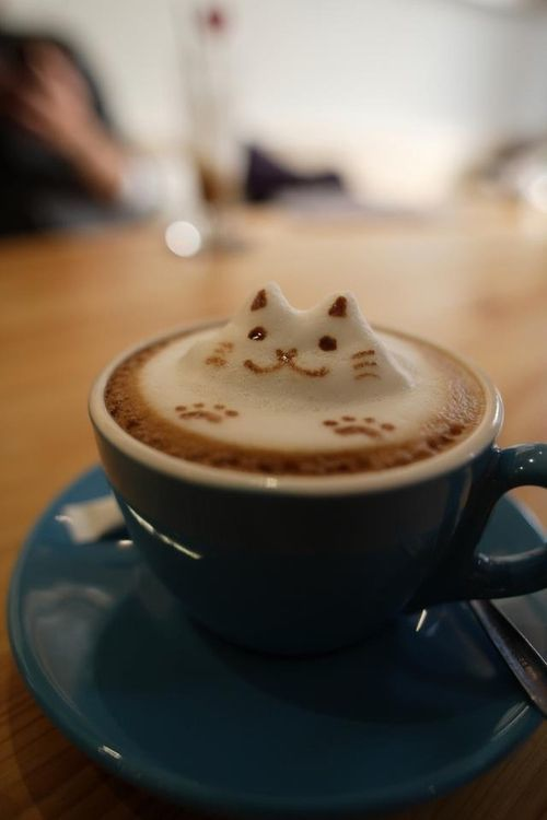 Cafe_chat-1454364749