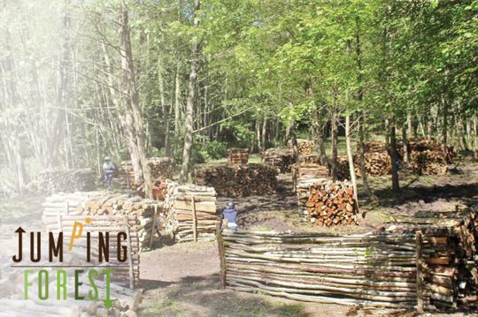 Laser_forest-1454495822