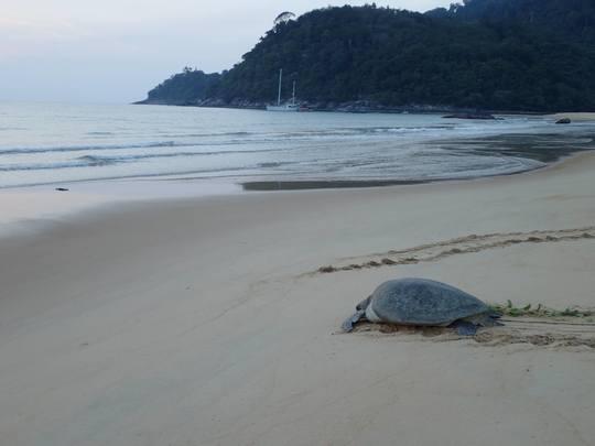 Turtle_02-1454537338