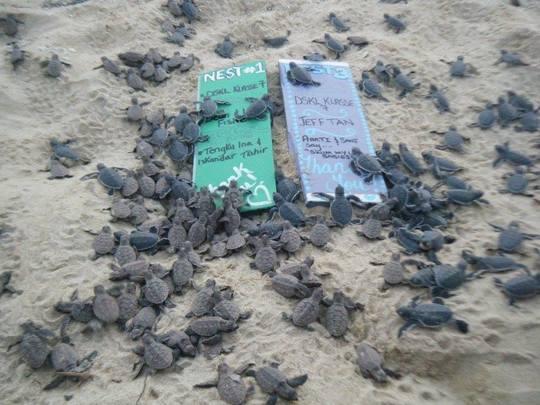 Turtle_03-1454537357