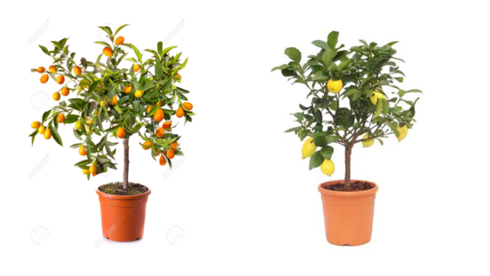 Fruits-1454859392
