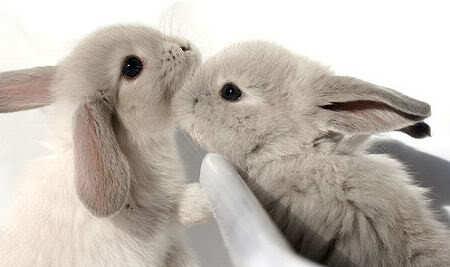 Bunnies-1455385074