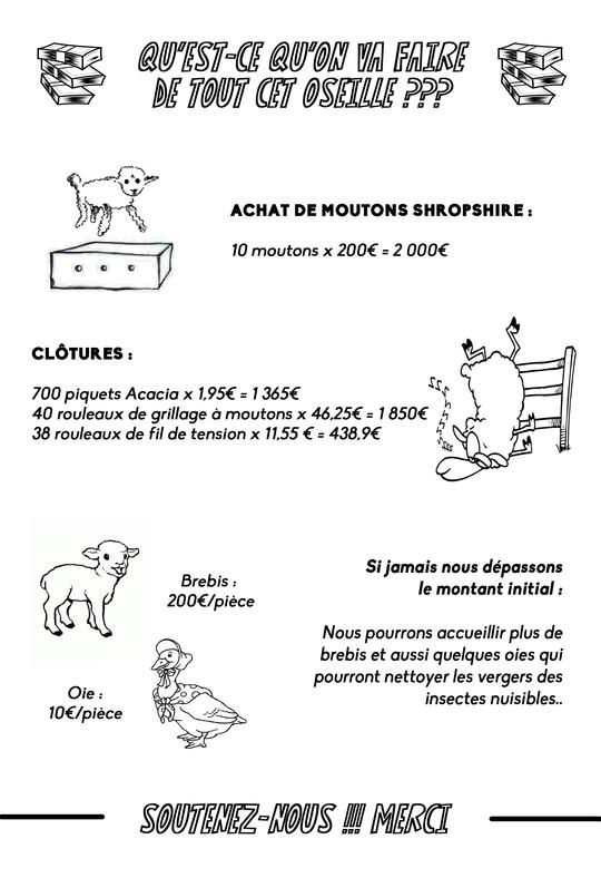 Collecte_moutons-1456824706