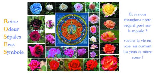 Rose-1458281367