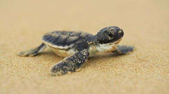 Small_turtle-1459281529