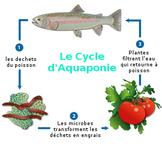 Aquaponicsoverviewfr-convertimage__1_-1460229448