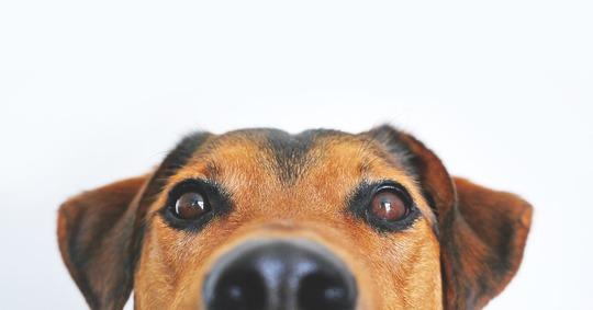 Dog-838281_960_720-1460294168