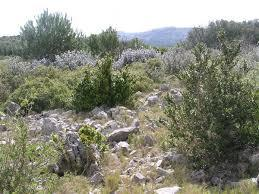Image_garrigue-1461053729