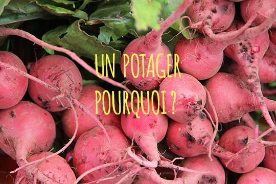 Radish-pourquoi_un_potager-1461106079