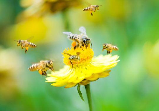 Les abeilles: de super ouvrières!