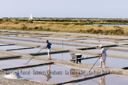 Aurelie-pascal-saunier-recoltants-ile-de-re-1462019025