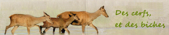 Bandeau-titre-des-cerfs-et-des-biches-1463218125