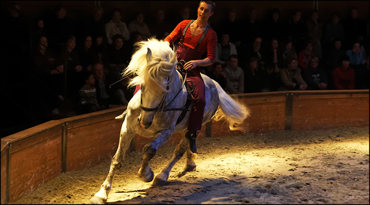 Evenement-cheval-1-1463935779
