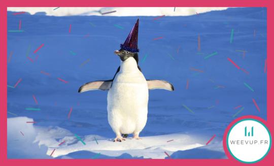 Pingouin2-1464695633