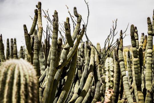 Saguaro-desert-museum-1-1465423346