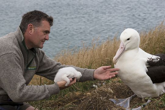 Lyndon-albatrosroyal-1465552464