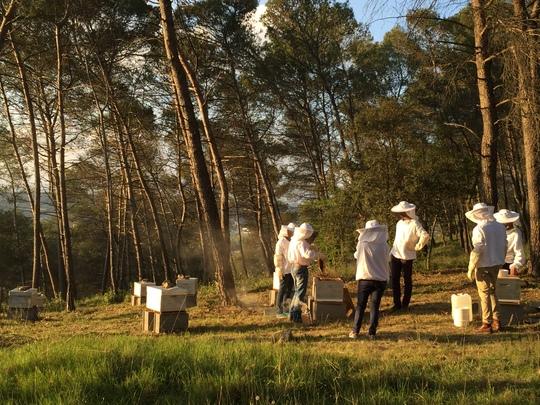Formation_apiculture_des_novices-1465841800