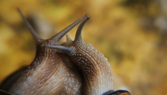 Escargots1-1466173836