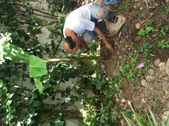 Banana_compost-1470658522