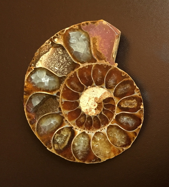 Ammonite_cristallise__e-1472579863