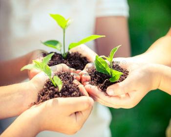 36495904-enfants-d-tenant-jeune-plante-dans-les-mains-contre-le-ressort-sur-fond-vert-ecology-concept-jour-de-1473171810