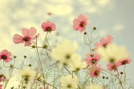 Fleur-1473865645