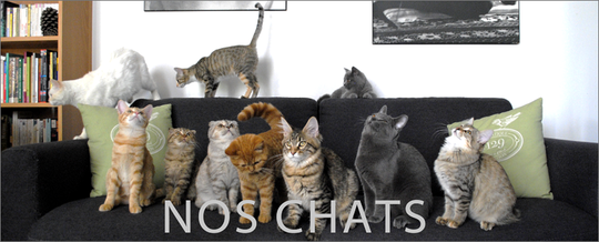Noschats2-1474803549