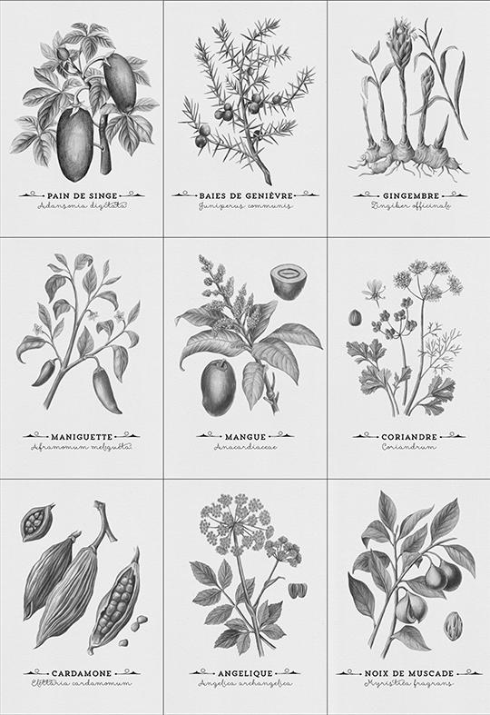 Botanique-kkbb-1476100910