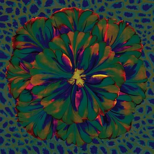 Fleur_1_verte_fonc_e_low-1476111964