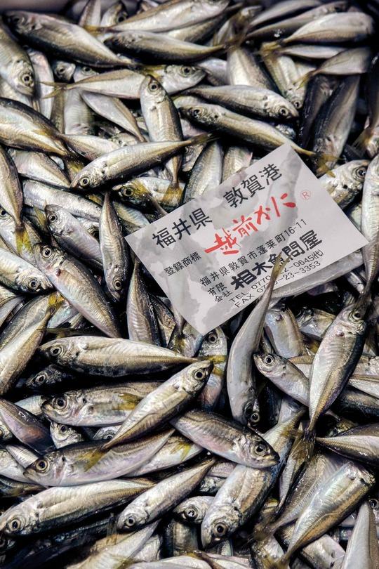 31-sardines-img_2407-1476911652