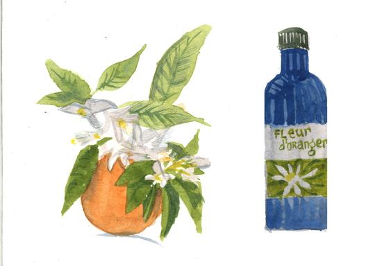 Fleurs-d-oranger-convertimage-1477331425