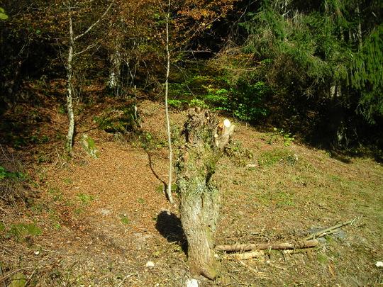 Nettoyage-d-automne__4_-1478106129