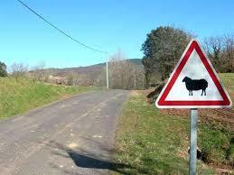 Mouton-1478353309