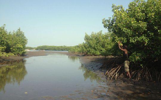 Mangrove-1482257777