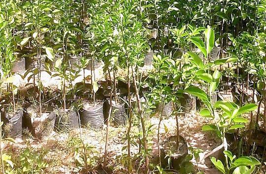 Treeseedlings-1482433940