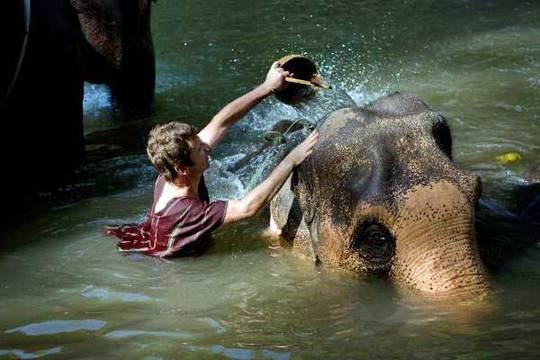 Baignade-avec-elephant-1483874344