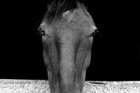 Brown-horse-bw-n09_conc_mini_modifi_-1-1484159883