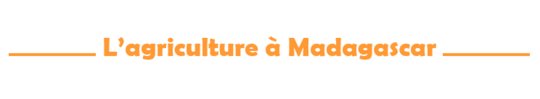 Cf_l_agiculture___mada-1484670260