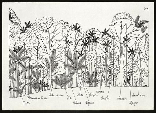 Dessin-arbres-001-1486497328
