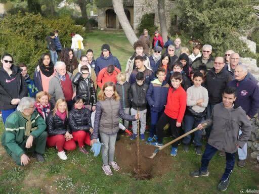 Plantation_cavaillon-1486847358