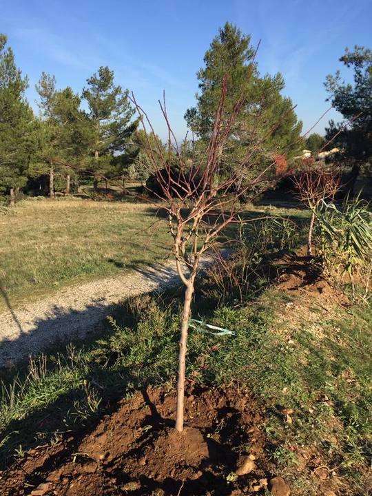 Plantation_eygali_res2-1486850221