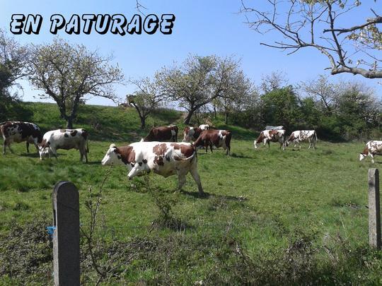 Paturage-1486983687